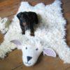 Shirley Sheep